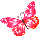 butterfly_pink