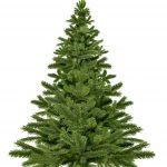 knutbaum