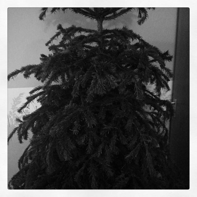 Trauerweiden-Tannenbaum