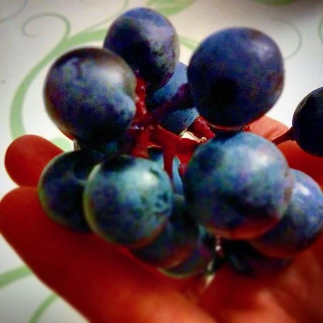 #Dornfelder #Weintrauben sind einfach extrem lecker. Da schmeckt man förmlich wie der #Wein sein würde ;-) #dieschönepfalz