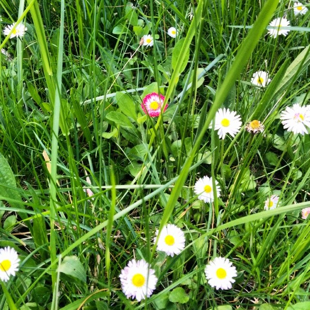 Wunderschöner Wildwuchs im Garten ;-) Jedoch nicht sicher vor Babykeks' Pflückdrang...